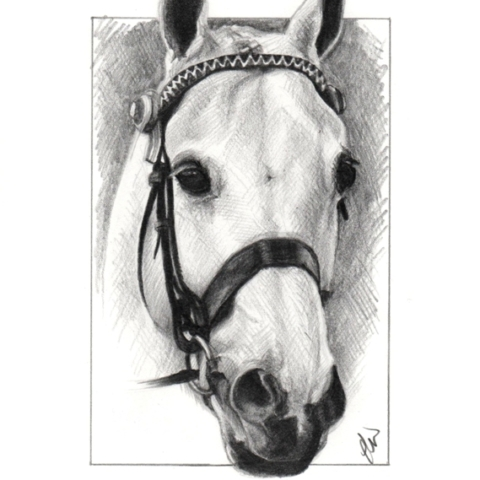 Pencil drawing of a white horse