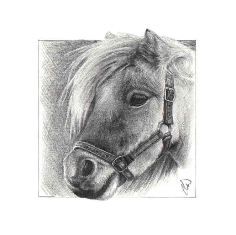 Pencil drawing of a Shetland Pony