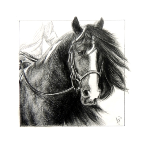 Pencil drawing of a Horse