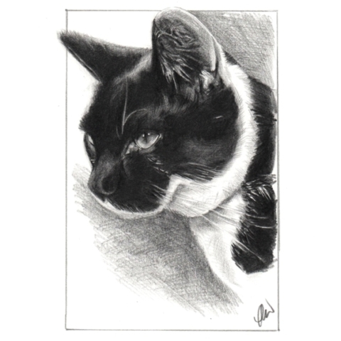 Pencil drawing of a Cat.