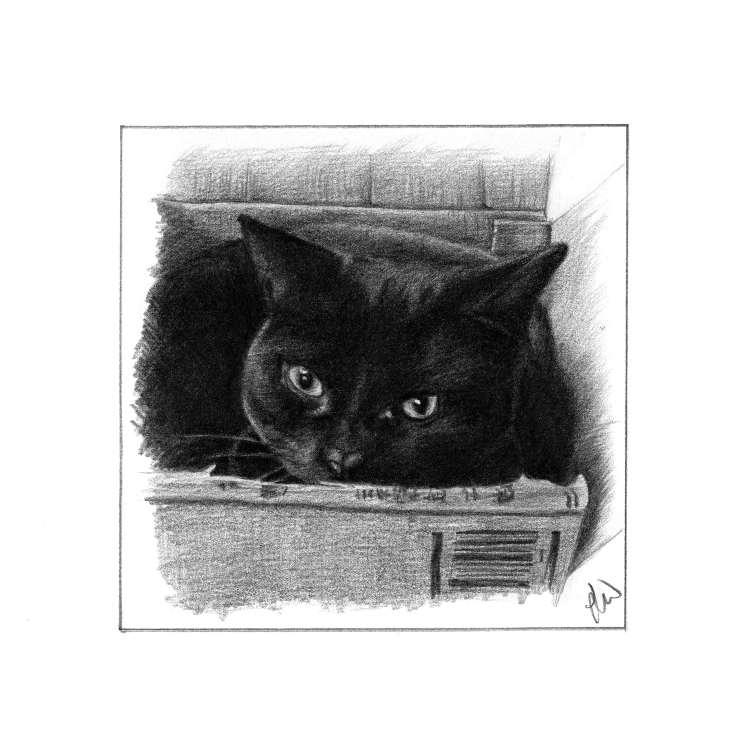 Pencil drawing of a black cat in a Box