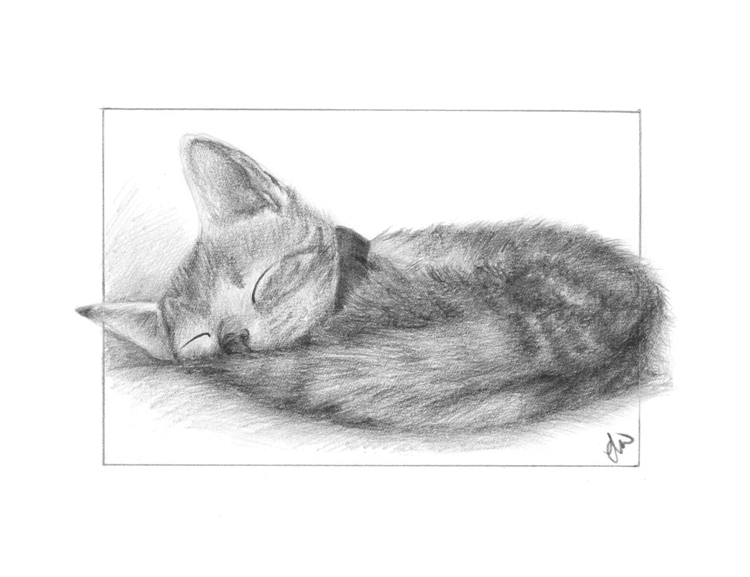 Pencil pet portrait of a Kitten