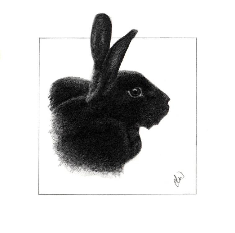 Pencil pet portrait of a black Rex Rabbit