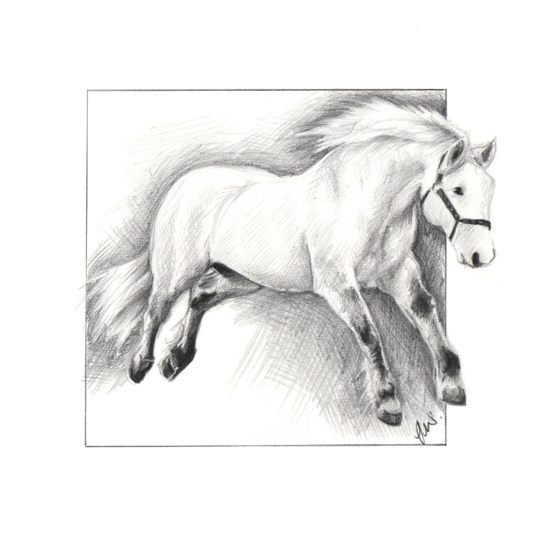 Pencil drawing of a Highland Pony