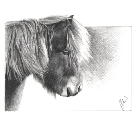 Pencil drawing of an Icelandic Pony
