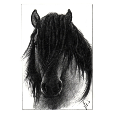 Dramatic pencil drawing of a Horse