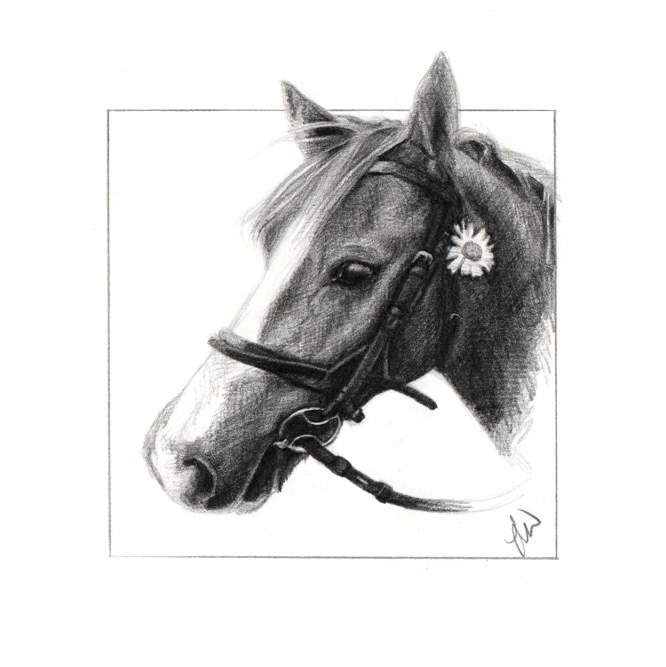 Pencil drawing of a pony