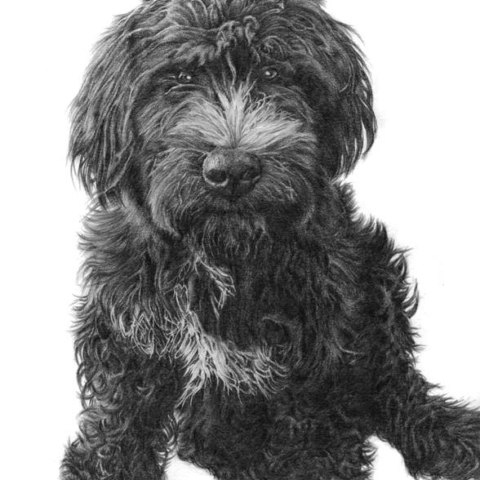Dog Pet Portrait in Pencil.