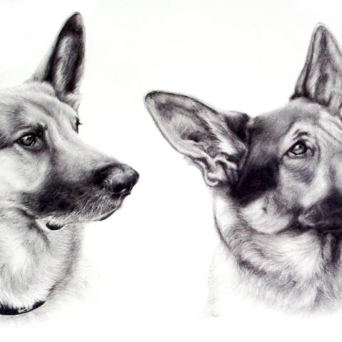 Pet Portrait of 2 Dogs