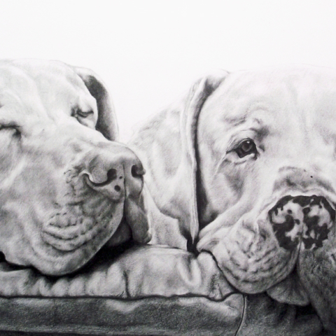 Dog Pet Portrait of 2 Dogs