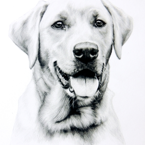 Graphite Pencil Pet Portrait