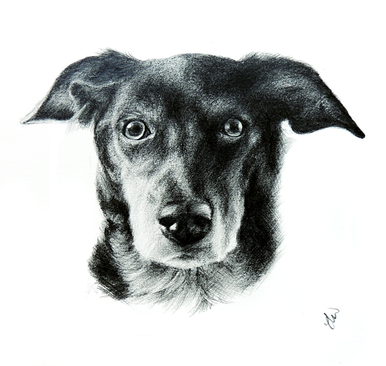Pet Portrait of a Dog.