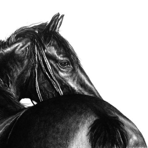 Graphite pencil drawing of a black horse