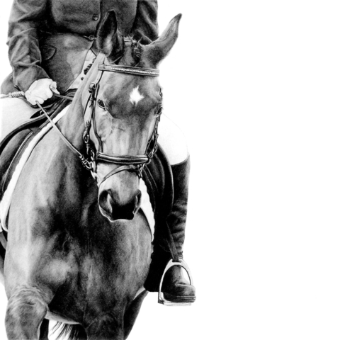 Graphite pencil drawing of a Dressage Horse