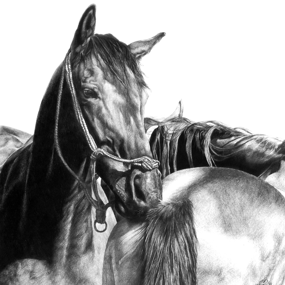 Pencil drawing of 2 horses having a scratch