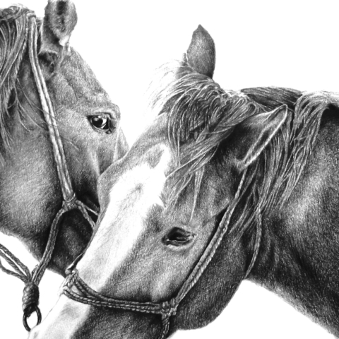 Pencil Horse Drawing of 2 Horses