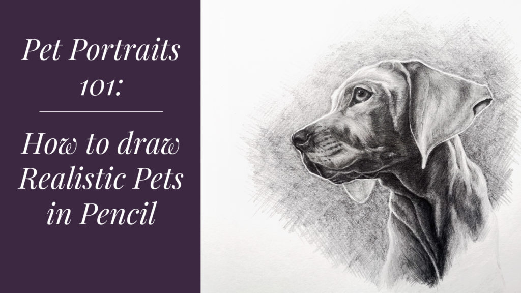 Pet Portraits 101 online drawing class. Learn how to draw realistic pets in pencil.