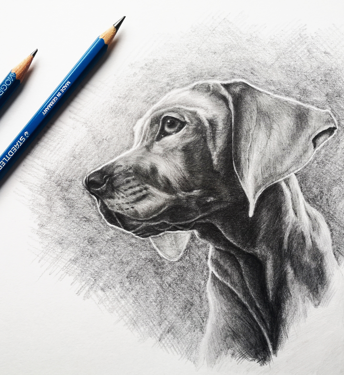 Learn to draw your own pets with Skillshare class, Pet Portraits 101